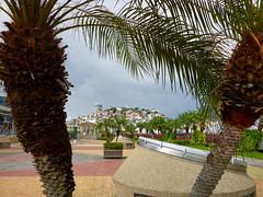 Las Peñas from Malecon 2000 (ggppix) Tags: placasdeloscontribuyentes malecon 2000 laspeñas guayaquil ecuador lighthouse hill elfaro palmtree colors plaza walkway pastel
