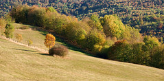 Colors of nature 3 (thorvonassgard) Tags: natur farben bunt herbst wiese bäume pflanzen wald sonne abend nature colors colorful autumn meadow trees plant forest sun evening