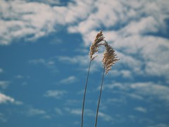 Together (J.C. Moyer) Tags: rustic gx80 lumix panasonic clouds nature sky blueskies