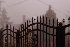 Morning fog (Bela Bodo) Tags: fence street winter early morning hammered trees blurry enigmatic flower