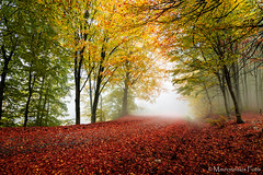 Autumn forest colors (Mavroudakis Fotis) Tags: forest dreamscape autumn woods trees vivid foliage lush nature rays outdoors path road trunk colorful yellow greece europe destination traveling hikking mountain leaves
