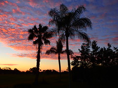 Sunrise January 16th (Jim Mullhaupt) Tags: sunrise sunup dawn sun morning sky clouds color red orange pink yellow blue tree palm silhouette weather tropical exotic wallpaper landscape bradenton florida manateecounty nikon coolpix p900 jimmullhaupt cloudsstormssunsetssunrises photo flickr geographic picture pictures camera snapshot photography nikoncoolpixp900 nikonp900 coolpixp900