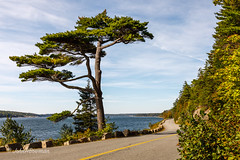 Somes Tree (John H Bowman) Tags: newengland maine hancockcounty parks nationalparks acadianp baysinlets somessound trees crookedtrees blueskywispyclouds september2017 september 2017 canon24704l explore
