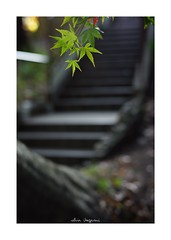 2018/12/1 - 4/15 photo by shin ikegami. - SONY ILCE‑7M2 / Carl Zeiss C Sonnar T* 1.5/50 ZM (shin ikegami) Tags: macro マクロ 紅葉 井の頭公園 吉祥寺 autumn 秋 sony ilce7m2 sonyilce7m2 a7ii 50mm carlzeiss sonnar csonnar50mmf15 tokyo sonycamera photo photographer 単焦点 iso800 ndfilter light shadow 自然 nature 玉ボケ bokeh depthoffield naturephotography art photography japan earth asia