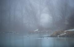 Dream, imagine (Ingeborg Ruyken) Tags: sneeuw morning grootewiel autumn empel herfst shertogenbosch ochtend mist instagram 500pxs fog natuurfotografie fall flickr snow