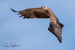 IMG-20180210-WA0008 (TARIQ HAMEED SULEMANI) Tags: sulemani tariq tourism trekking tariqhameedsulemani winter wildlife wild birds nature nikon
