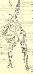 This image is taken from A handbook of anatomy for art students [electronic resource] (Medical Heritage Library, Inc.) Tags: anatomy artistic wellcomelibrary ukmhl medicalheritagelibrary europeanlibraries date1899 idb20401589