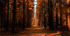 Lost in a forest (dmunro100) Tags: forest kuitpo southaustralia photoshopped blurring trees