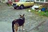 (Chris Hester) Tags: 47 3p northern ireland farmhouse dew dog yellow car