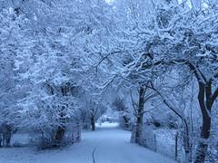 Snow Arch (Marit Buelens) Tags: drive dreef sneeuw boom takken branches belgium belgië vlaanderen westvlaanderen flanders bruges brugge