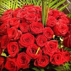 What a beautiful rose bouquet! Surely one to buy if you want to impress this Valentine's Day! Click the link in our bio to order a beautiful bouquet today ❤❤❤ . . #parsleyandsageflorist #stokeontrent #redroses #redroses🌹 #roses:rose (parsleyandsage11) Tags: valentinesday2019 floraldesign valentinesdaygifts flowergram redroses valentinesdaygiftideas valentinesdaygift flowersofinstagram flowerbeauties valentinesdayflowers flowerfix parsleyandsageflorist valentines valentinesday stokeontrent roses