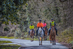 Sunday Riders (PJB32) Tags: equitation horses riders flora fauna countryside lane outdoors