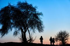 Pastel colors (Michal Zawolek) Tags: krakow kraków krakau cracow poland autumn fall highcontrast high contrast pastel tree trees people silhouette figure shadow shadows outline dusk twilight