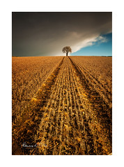 The Lisbane Tree (RonnieLMills 6 Million Views. Thank You All :)) Tags: lone tree dark clouds quarry road lisbane stubble field leading lines farming county down northern ireland lisbanetree ronnielmills landscape photography ballydrain