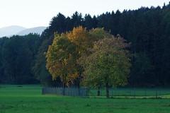 Herbst (Aah-Yeah) Tags: herbst autumn fall sonne sun achental grassau chiemgau bayern