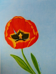 xPB030236ReachForTheSky (dorothylee) Tags: art fineart fantasy dorothyleeart fantasyimaging color colour colorful colourful coloredpencil colouredpencil coloredpencilpainting flowers floral flower tulip tulips