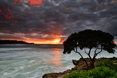 North Shore Sunset (David Shield Photography) Tags: oahu northshore hawaii sunset landscape seascape sky clouds storm ocean water tree coast color light nikon glow