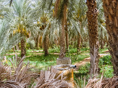 Palm Trees Farm