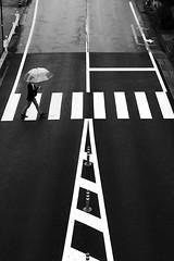 (cherco) Tags: zebracrossing umbrella urban urbano japan nagano man walk lines blackandwhite blancoynegro black composition composicion canon city ciudad calle street repetition walker lonely alone monochrome moment rain direccion direction solitario solitary silhouette silueta old new happyplanet asiafavorites