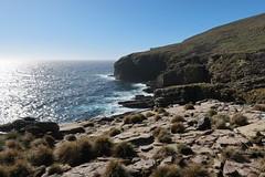2018-102756 (bubbahop) Tags: 2018 antarcticatrip falklandislands newisland hike