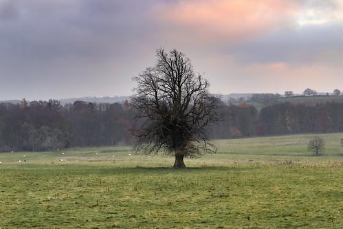 Wallington Tree