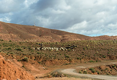 20181114-250 (sulamith.sallmann) Tags: landschaft afrika atlas atlasgebirge berge gebirge marokko mountains schäfer sulamithsallmann