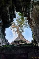 Angkor Thom – 31 (Roy Prasad) Tags: green cambodia asia khmer travel architecture temple angkorwat prasad royprasad hindu buddhist ruins ancient phaseone xf schenider tree sony a7r a7rm3 sky