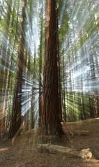 © Serie Otoño 2018 (Jesus Portal) Tags: 2018 6d angular canon color filtro natural paisaje serie tonos 1740 otoño hojas polarizador bosque ramas rocas cantabria secuoyas efecto zoom luces