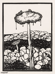 Dripping mushroom (1916) by Julie de Graag (1877-1924). Original from The Rijksmuseum. Digitally enhanced by rawpixel. (Free Public Domain Illustrations by rawpixel) Tags: antique art artwork drawing dripping drippingmushroom handdrawn illustrated illustration illustrator juliedegraag mushroom old pdrijks publicdomain rijksmuseum sketch stamp vegetable vintage woodcut