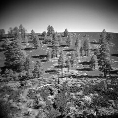 Sunset Crater (LowerDarnley) Tags: holga arizona az sunsetcrater volcano trees southwest crater