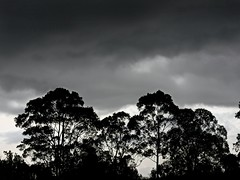 Rainy days, stormy days I (Colour photo) (elphweb) Tags: hdr highdynamicrange nsw australia cloudy clouds rainy sky skies almostbw tree trees silhouette forest bush wood stormy