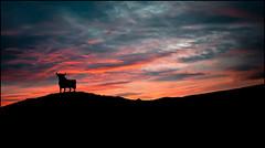 SILUETA . (TOYOGRACOR) Tags: panoramica canon explore mygearandme mygearandmepremium mygearandmebronze mygearandmesilver lanscape abigfave anpegon paisajes mywinners nwn panorama flickr dof flickrdiamond panoramafotografico galaxy windmills platinumheartward bej godlovesyou fav50 fav100 silueta toro amanecer rojo azul negro