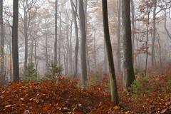 Calme et sérénité au cœur de la forêt (Excalibur67) Tags: nikon d750 sigma globalvision art 24105f4dgoshsma paysage landscape forest foréts arbres trees automne autumn brume mist nature