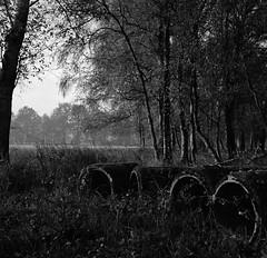 December morning in the fields (Rosenthal Photography) Tags: ff120 epsonv800 20181202 6x6 asa400 schwarzweiss ilfordhp5 weltaweltax mittelformat analog ilfordrapidfixer december winter autumn morning sunrise dawn fields tubes trees landscape mood blackandwihite watla weltax zeiss czj tessar 75mm f35 ilford hp5 hp5plus lc29 129 epson v800 cold fog mist sun sky welta