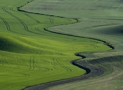 DSCF2096-Edit-2 (Brian.Schick) Tags: palouse green steptoe washington wheat