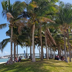 Life is Like a Landscape (MelanieInMiami) Tags: museumpark palmtrees