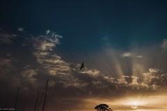 Birds in the Sky... (hobbit68) Tags: fujifilm xt2 sky himmel clouds wolken vogel bird boote boats sonne sun sonnenschein sommer sunset strand spanien sonnenuntergang sunshine spain summer espanol espagne espana andalusien andalucia baum trees hafen puerto port holiday urlaub