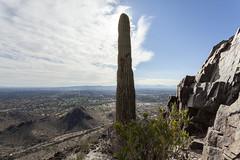 Piestewa Peak (Lucie Maru) Tags: piestewapeak cacti cactus desert arizona phoenix hike hiking mountain urban urbanwalk peak