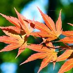Orange Bokeh Leaves thumbnail