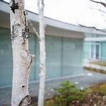 The largest number of types of tree planted is white birch. They suit the architecture. 屋外には白樺がたくさん。