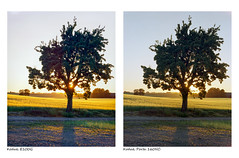 Slide vs Negative (magnus.joensson) Tags: sweden skåne summer june söderslätt large format 4x5 intrepid camera voigtlander heliar 21cm f45 kodak ektachrome e100g e6 porta 160nc exp ncps epson v800 scan
