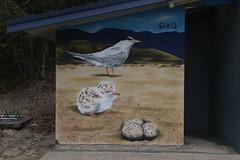 Lake Conjola (RossCunningham183) Tags: lakeconjola nsw australia birds littletern mural trait eggs chick publictoilet toiletblock