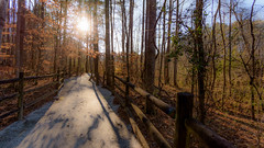26/365 Afternoon (Maggggie) Tags: 365 119in2019 52for2019 trees sun light boardwalk outdoors afternoon burst newmanwetlandscenter hampton georgia 365the2019edition 3652019 day26365 26jan19 explore