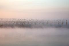 1-rid-max (claudiomantova1) Tags: landscape riflessi atmosfera nebbia paesaggio fiume acqua natura