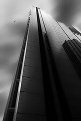 Kite (Emerald Imaging Photography) Tags: sydney sydneycity new newsouthwales nsw australia australian australianlandscape city cityscape urbanlandscape bird le longexposure building bw blackandwhite