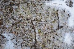 Sula Mörbischis (anuwintschalek) Tags: nikond7000 d7k 18140vr austria burgenland mörbisch mörbischamsee seebadmörbisch neusiedlersee järv see lake tauwetter sula thaw jää ice eis talv winter january 2019
