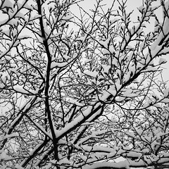 Snow 1 (justingreen19) Tags: england ricoh ricohgrii seasons suffolk branches cold contrast justingreen19 mono snow square trees urban urbanabstract weather winter
