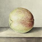 Peach by Jean Bernard (1775-1883). Original from The Rijksmuseum. Digitally enhanced by rawpixel. thumbnail