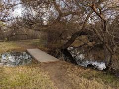 Shallow Bridge (Kelson) Tags: madronamarsh marsh nature hike torrance california trees southbay plants pond