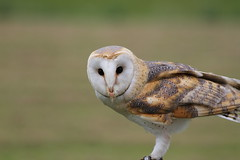 IMG_1422 (Stefan Kusinski) Tags: hemsley duncombe ncbp birdofprey